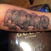 PL-B&G Elephants